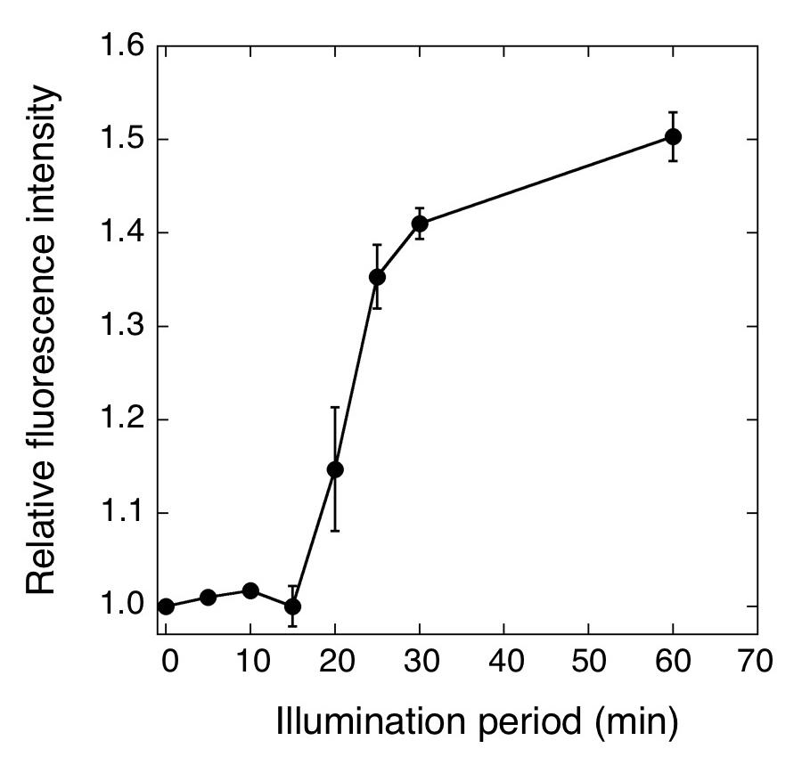 Developing A Novel Oxygen Sensing Fluorescence Protein