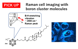 Raman cell imaging with boron cluster molecules