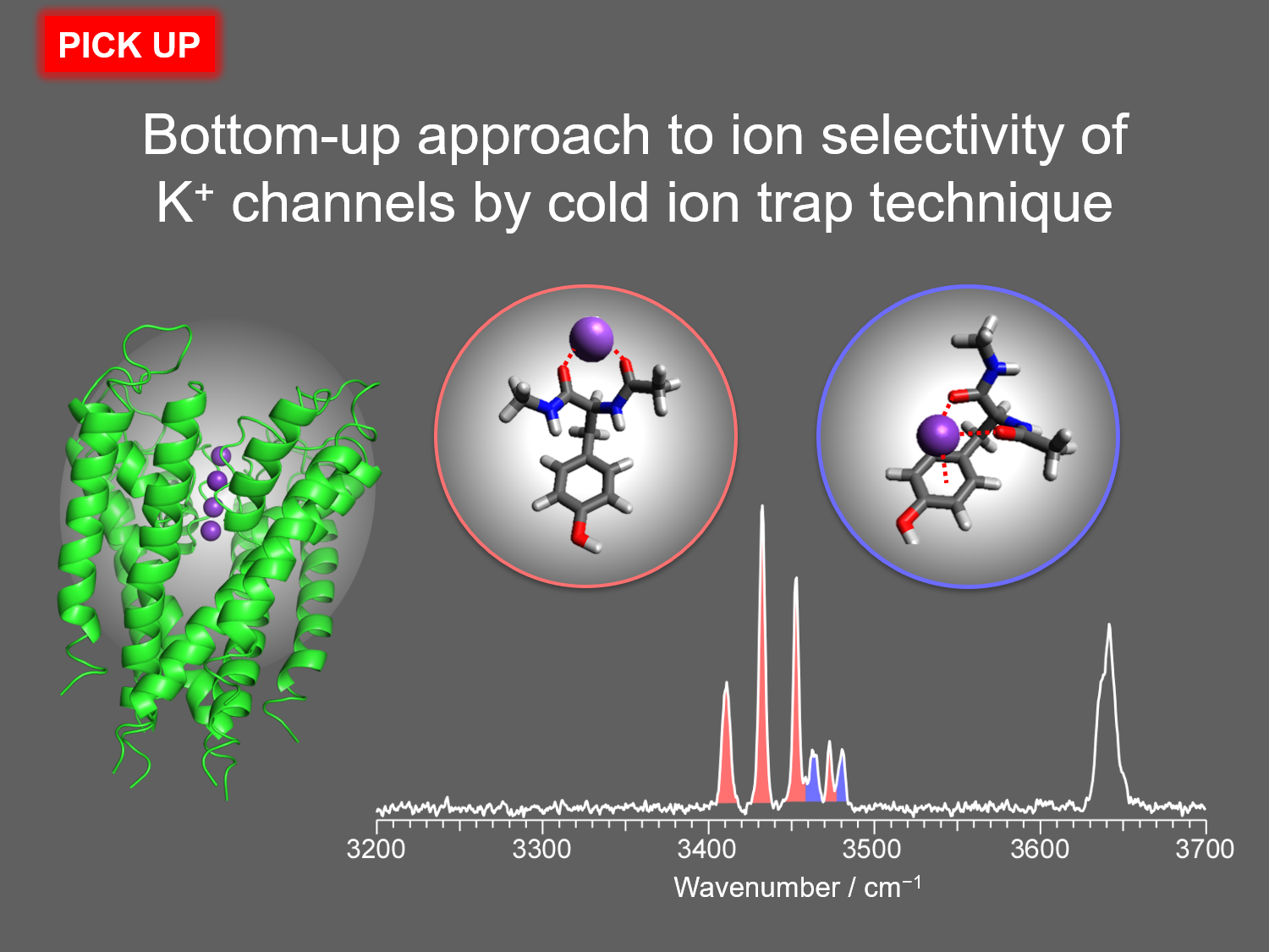Bottom-up approach to ion selectivity of K<sup>+</sup> channels by cold ion trap technique