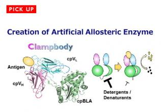 Towards the Control of Enzyme Activity by a Molecule of your Choice<br>〜Development of Antibody-fused Enzymes〜