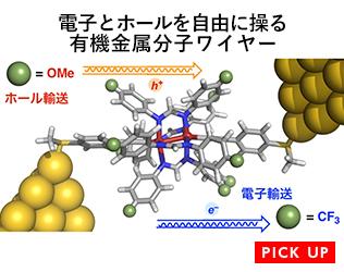 電子とホールを自由に操る有機金属分子ワイヤー